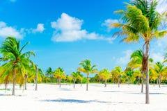 λευκό δέντρων άμμου φοινικών παραλιών βραδύτατο sirena playa της Κούβας cayo χρωματισμένος cayo βραδύτατος πολυ φοίνικας τρία της στοκ φωτογραφίες