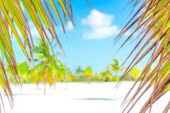 λευκό δέντρων άμμου φοινικών παραλιών βραδύτατο sirena playa της Κούβας cayo χρωματισμένος cayo βραδύτατος πολυ φοίνικας τρία της στοκ εικόνα