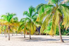 λευκό δέντρων άμμου φοινικών παραλιών βραδύτατο sirena playa της Κούβας cayo χρωματισμένος cayo βραδύτατος πολυ φοίνικας τρία της στοκ εικόνα με δικαίωμα ελεύθερης χρήσης