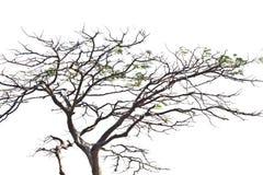 λευκό δέντρων ανασκόπηση&sigma Στοκ Φωτογραφίες