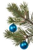 λευκό δέντρων διακοσμήσ&epsil Στοκ Εικόνες
