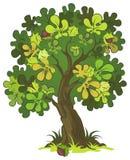 λευκό δέντρων κάστανων ανα Στοκ Φωτογραφίες