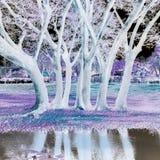 λευκό δέντρων Στοκ φωτογραφίες με δικαίωμα ελεύθερης χρήσης