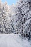 λευκό δασικών δρόμων στοκ εικόνα με δικαίωμα ελεύθερης χρήσης