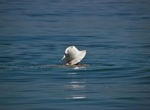 λευκό θάλασσας καπέλων στοκ φωτογραφία με δικαίωμα ελεύθερης χρήσης