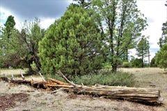 Λευκό κέντρο φύσης βουνών, όχθη της λίμνης Pinetop, Αριζόνα, Ηνωμένες Πολιτείες στοκ εικόνα με δικαίωμα ελεύθερης χρήσης