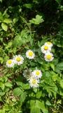Λευκό και κίτρινος Στοκ φωτογραφία με δικαίωμα ελεύθερης χρήσης