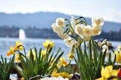 Λευκό και κίτρινος Στοκ εικόνες με δικαίωμα ελεύθερης χρήσης
