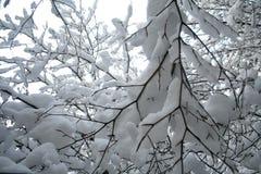 λευκό κλάδων Στοκ φωτογραφίες με δικαίωμα ελεύθερης χρήσης