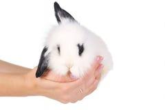 λευκό κουνελιών χεριών Στοκ φωτογραφία με δικαίωμα ελεύθερης χρήσης