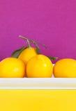 λευκό λεμονιών πιάτων Στοκ φωτογραφία με δικαίωμα ελεύθερης χρήσης
