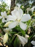 Λευκό ομορφιάς λουλουδιών στοκ φωτογραφία με δικαίωμα ελεύθερης χρήσης