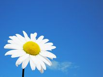 λευκό ουρανού λουλο&upsilo στοκ εικόνα