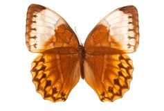 λευκό πεταλούδων Στοκ φωτογραφία με δικαίωμα ελεύθερης χρήσης