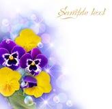 λευκό πλαισίων λουλο&upsilo Στοκ φωτογραφία με δικαίωμα ελεύθερης χρήσης
