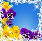 λευκό πλαισίων λουλο&upsilo Στοκ Εικόνες