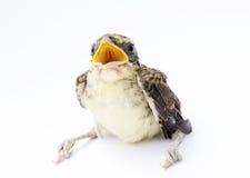 λευκό πουλιών ανασκόπησ&eta στοκ εικόνες με δικαίωμα ελεύθερης χρήσης