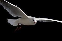 λευκό πουλιών Στοκ εικόνες με δικαίωμα ελεύθερης χρήσης