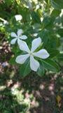 Λευκό σε πράσινο Στοκ Εικόνες