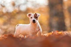 λευκό σκυλιών στοκ φωτογραφίες με δικαίωμα ελεύθερης χρήσης