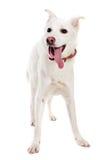 λευκό σκυλιών Στοκ Φωτογραφίες