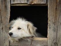 λευκό σκυλιών Στοκ φωτογραφία με δικαίωμα ελεύθερης χρήσης