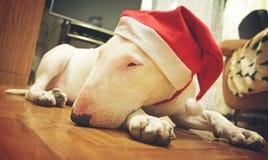 Λευκό τεριέ ταύρων σε ένα καπέλο Χριστουγέννων Στοκ φωτογραφία με δικαίωμα ελεύθερης χρήσης