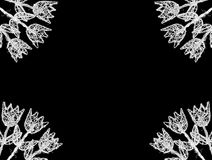 λευκό τουλιπών πλαισίων Στοκ Εικόνες
