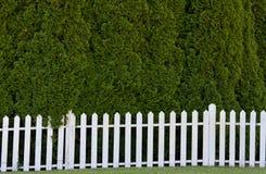 λευκό φραγών pickett Στοκ Φωτογραφία