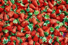 λευκό φραουλών Στοκ εικόνα με δικαίωμα ελεύθερης χρήσης