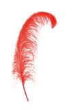 λευκό φτερών στοκ εικόνες
