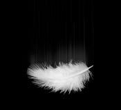 λευκό φτερών Στοκ Φωτογραφίες
