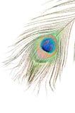 λευκό φτερών peacock Στοκ φωτογραφίες με δικαίωμα ελεύθερης χρήσης