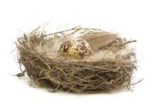λευκό φωλιών αυγών ανασκόπησης Στοκ φωτογραφία με δικαίωμα ελεύθερης χρήσης