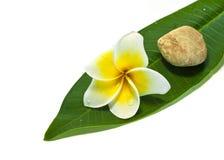 λευκό frangipani ανασκόπησης στοκ φωτογραφίες
