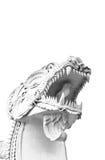 λευκό leo Στοκ Εικόνα