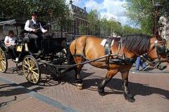Λεωφορείο αλόγων στο Άμστερνταμ Στοκ Εικόνα