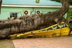Λεωφορείο που συμπιέζεται από το δέντρο κατά τη διάρκεια του τυφώνα, Δομίνικα, Στοκ Εικόνα