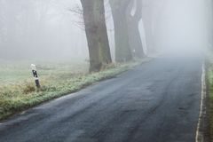 Λεωφόρος δέντρων με το δρόμο στην ομίχλη - εθνικό πάρκο Elbtalaue στο Elbe Γερμανία Στοκ Εικόνες