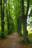 λεωφόρος πράσινη Στοκ εικόνα με δικαίωμα ελεύθερης χρήσης