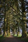 Λεωφόρος στα δέντρα Στοκ Εικόνα