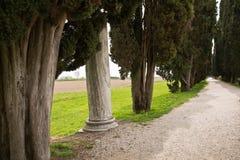 Λεωφόρος των δέντρων κυπαρισσιών σε Aquileia, Ιταλία Στοκ φωτογραφίες με δικαίωμα ελεύθερης χρήσης