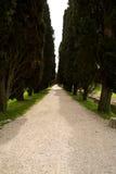Λεωφόρος των δέντρων κυπαρισσιών σε Aquileia, Ιταλία Στοκ Εικόνες