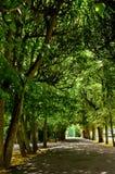 Λεωφόρος των δέντρων Στοκ εικόνα με δικαίωμα ελεύθερης χρήσης
