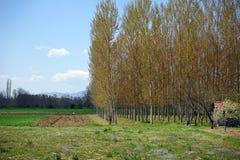 Λεωφόρος των δέντρων Στοκ Εικόνες