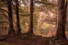 Λεωφόρος των δέντρων Στοκ Φωτογραφία