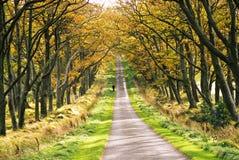λεωφόρος φθινοπώρου στοκ φωτογραφίες