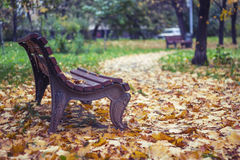 Λεωφόρος φθινοπώρου Στοκ φωτογραφία με δικαίωμα ελεύθερης χρήσης