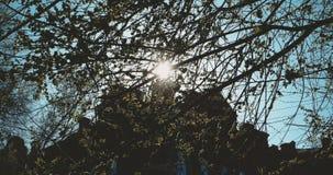 Λεύκα στην ηλιόλουστη ημέρα της άνοιξη Το υπόβαθρο φύσης με τη λεύκα διακλαδίζεται μπροστά από τον τρέμοντας ήλιο ημέρας με το πα φιλμ μικρού μήκους