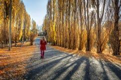 Λεύκες κατά μήκος της αγροτικής εθνικής οδού στοκ φωτογραφία με δικαίωμα ελεύθερης χρήσης